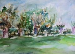 """Gonny van der Weerd, aquarel """"knotwilgen bij Zalk"""" afm. 62 x 44 cm."""