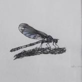 Hetty Diender, Libelle, gemengde techniek, 14 x 15 cm