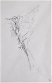Hetty Diender, Vogeltje, potlood, 15 x 10 cm
